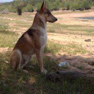 Pluto. Corrección de conducta y Educación canina cívica