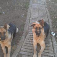 Kira y Kora. Eran perras escapistas