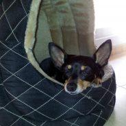 Nuka. Corrección de conducta y Educación canina cívica
