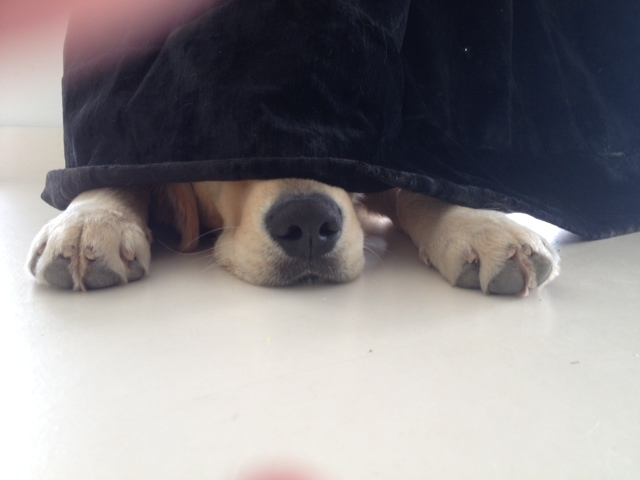 Revisión bucal canina