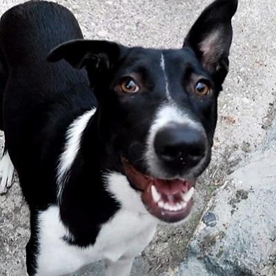 clientes caninos felices canes con modales