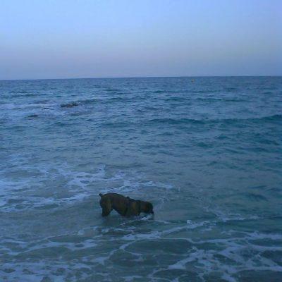 Luc en el mar