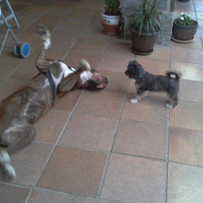 Luc haciendo amigos