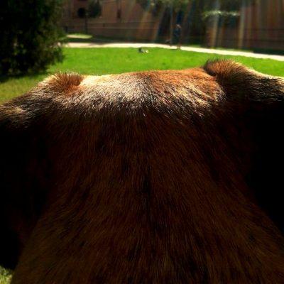 Luc mirando a un can