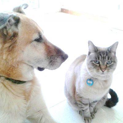 Nala y Rocco