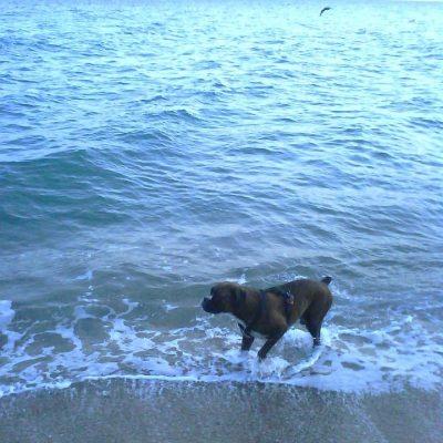 Saliendo rápido la mar está muy friía.. dirección Bcn