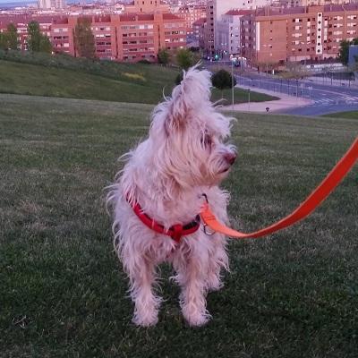 equipo canes con modales 1