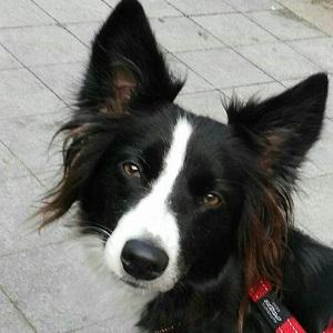 testimonio arwen servicio adiestramiento y comunicacion canes con modales