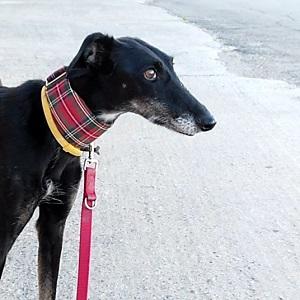 testimonio beltza servicio paseadores caninos canes con modales
