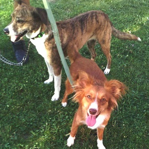 testimonio nueva y kora servicio cuidadores caninos a domicilio canes con modales