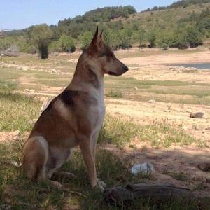 testimonio pluto servicio paseadores caninos canes con modales