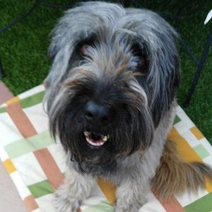 testimonio vigo servicio cuidadores caninos a domicilio canes con modales